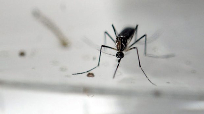 First human case of West Nile virus confirmed in Hamilton